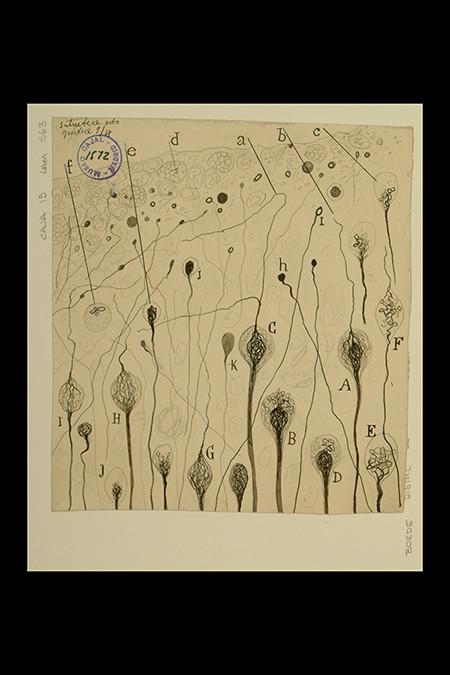 """Santiago Ramón y Cajal; Borde distal de una herida cerebral de perro, 1914, tinta xinesa sobre paper, 15,1 x 13,8 cm. Cortesía del Instituto Cajal, """"Legado Cajal"""", Consejo Superior de Investigaciones Científicas, CSIC, Madrid."""