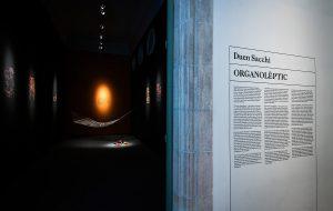 Exposició 'Organolèptic', de Duen Sacchi              | Pep Herrero