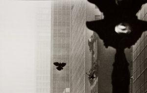 Poeta a Nova York. Foto: Oriol Maspons / MNAC