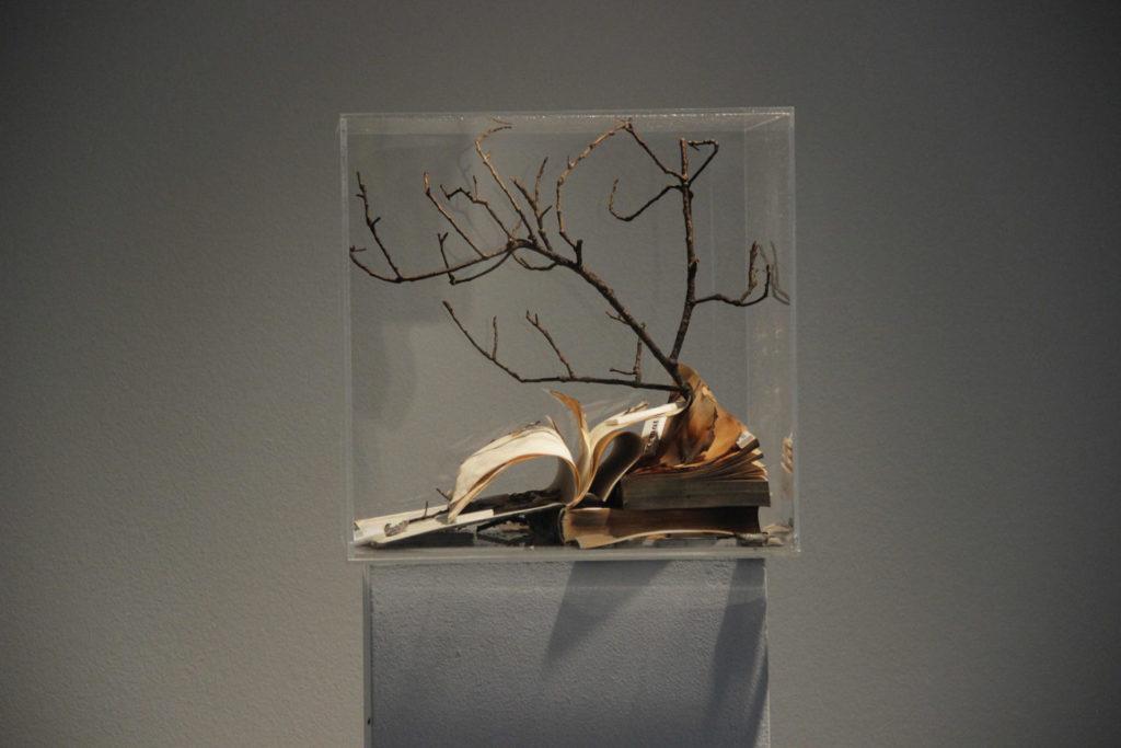 La natura com a metàfora, a Les Bernardes. Foto: Antonio Salcedo