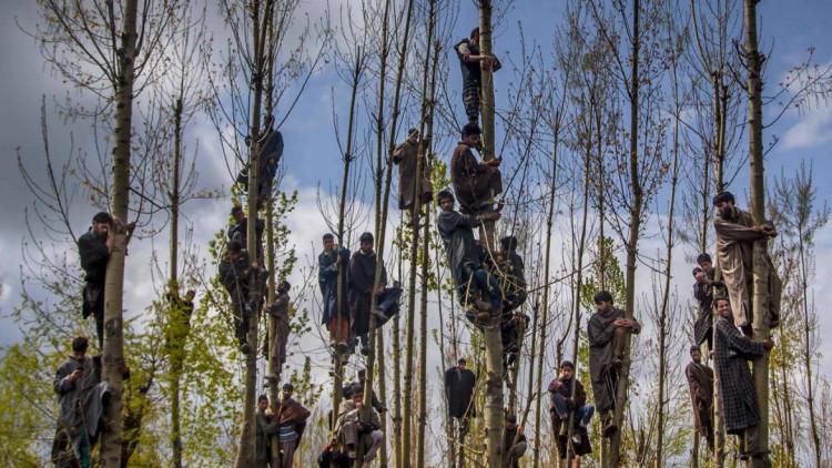 Musulmans del Caixmir enfilats als arbres per veure passar el seguici fúnebre de Waseem Malla, presumpte activista del Hizbul Mujahideen, un grup caixmir pro-pakistaní. | DAR YASIN / THE ASSOCIATED PRESS