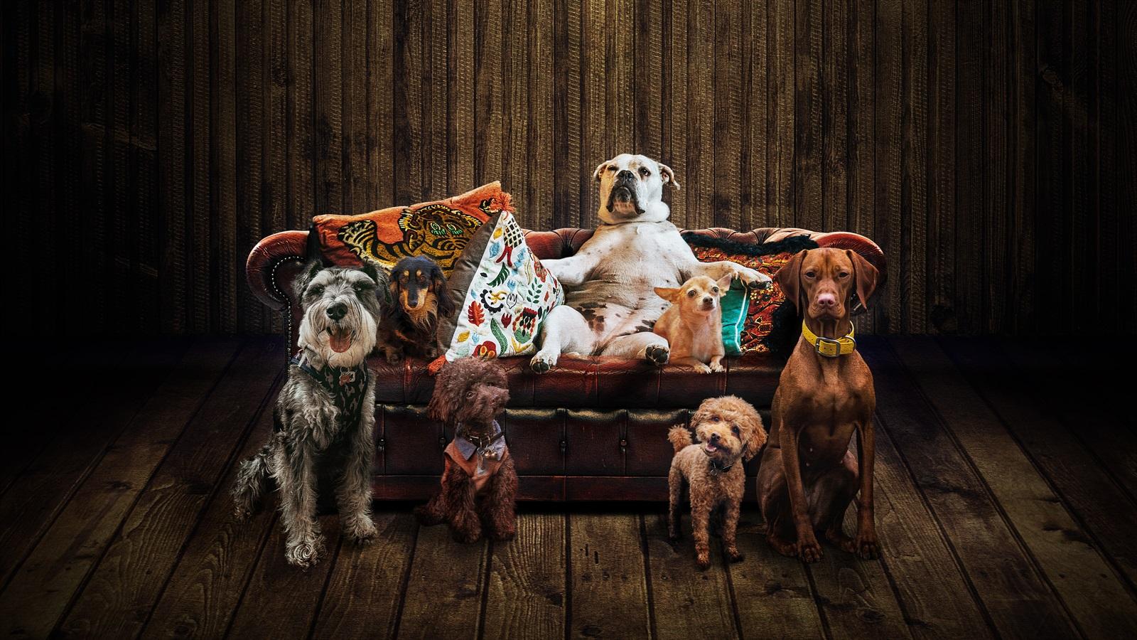 La Villarroel obrirà la temporada amb 'Els gossos', de Nelson Valente.